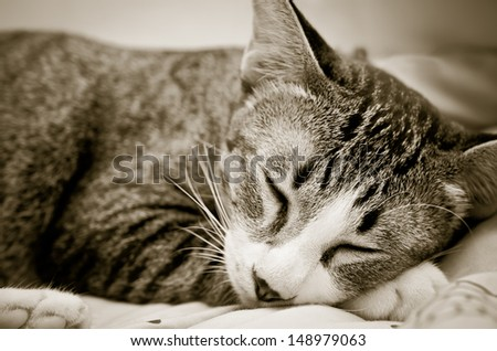 Cat sleeping happily on the bed - stock photo