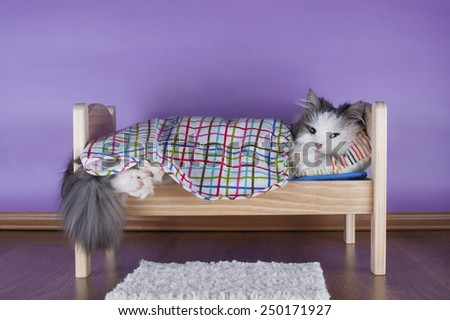 cat sleeping in her bed - stock photo