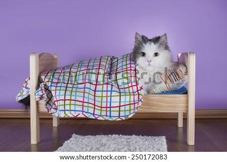 cat sleeping in her bed - stock photo