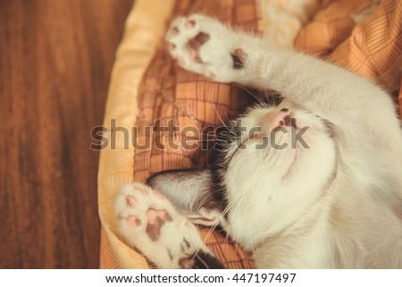 cat sleeping in the blanket, selective focus - stock photo