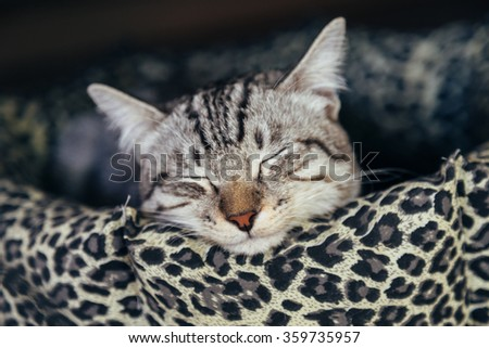 cat sleeping in the cat bed - stock photo