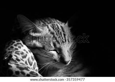 cat sleeping in the cat bed, black and white photo - stock photo