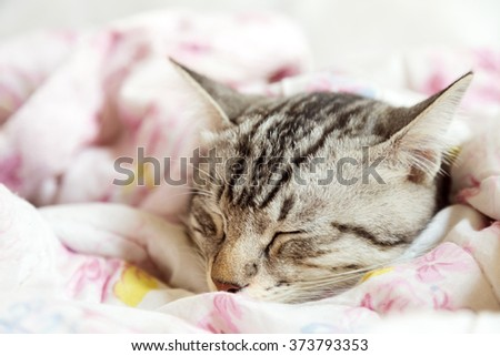cat sleeping in the pink floral blanket - stock photo