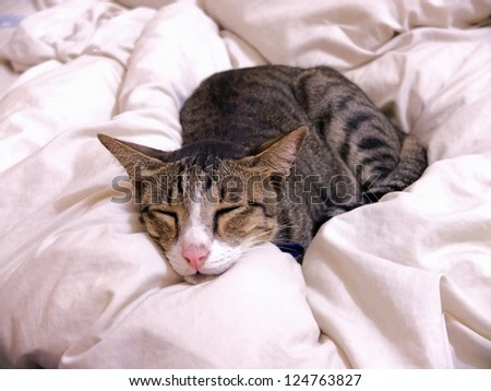 Cat sleeping on bed cover at home. - stock photo