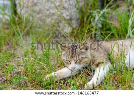 cat sleeping on the grass - stock photo