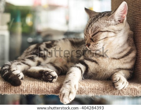Cat sleeping on the shelves . - stock photo