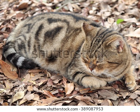 Cat sleeping on top of the fallen leaves - stock photo