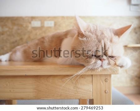 Cat sleeping on wood table - stock photo