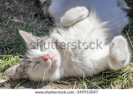 Cat sleeping, summer. - stock photo