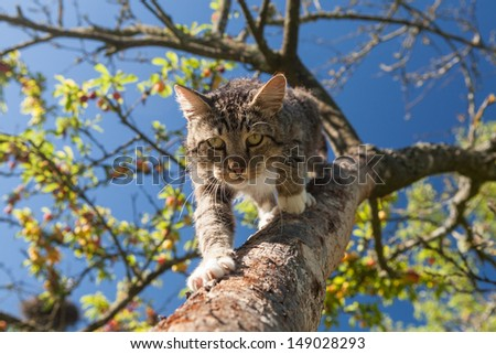 Cat slink over the tree branch in the garden on the blue sky background - stock photo