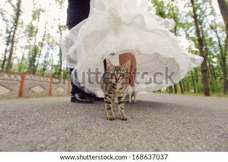 cat standing close to kissing newlyweds - stock photo