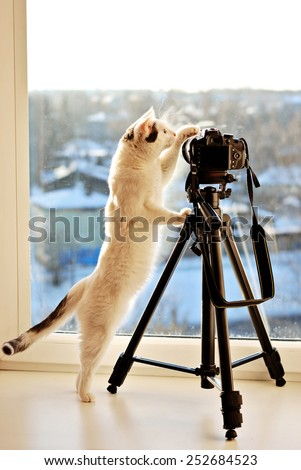 Cat standing on his hind legs to inspect camera on the tripod  - stock photo