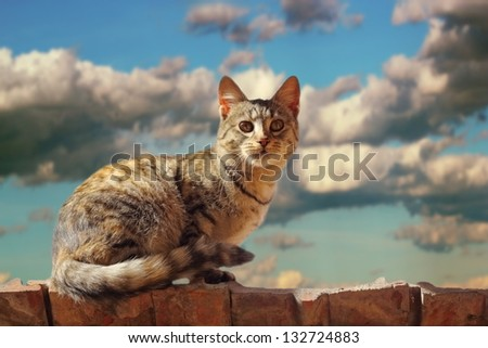 cat standing on the roof before the storm - beautiful lit by the setting sun - stock photo