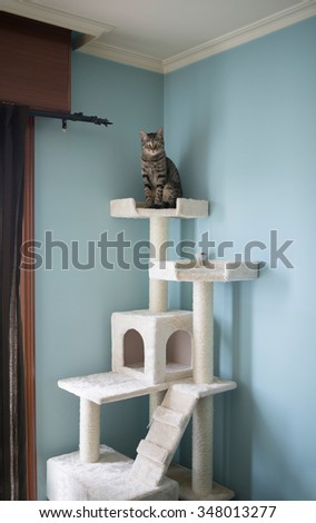 Cat standing on the top of a toy for cats at home - stock photo