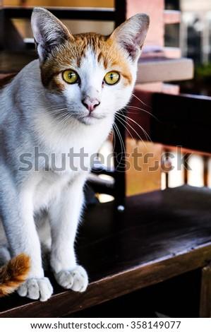Cat staring  - stock photo
