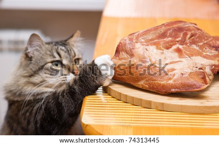 Cat steals piece of meat from the kitchen table - stock photo