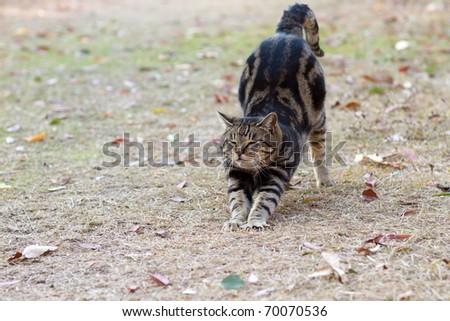 Cat stretch - stock photo