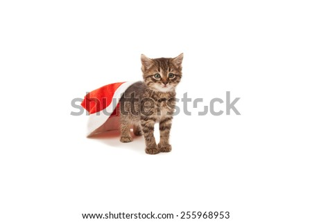 Cat stuck at Santa's red hat isolated on white - stock photo