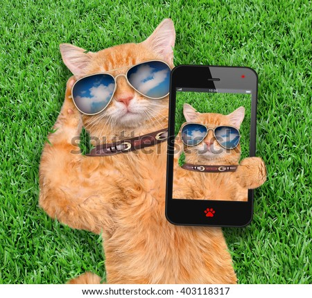 Cat taking a selfie. - stock photo