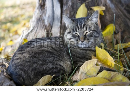 Cat taking nap in the leaves - stock photo