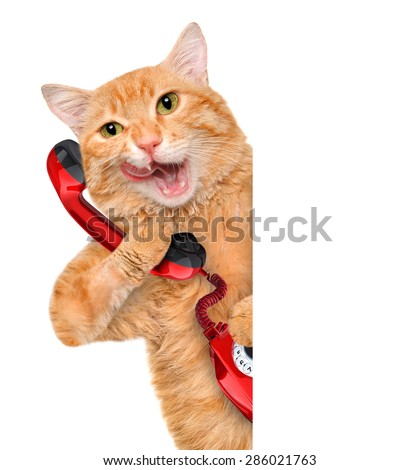 Cat talking on the phone. - stock photo