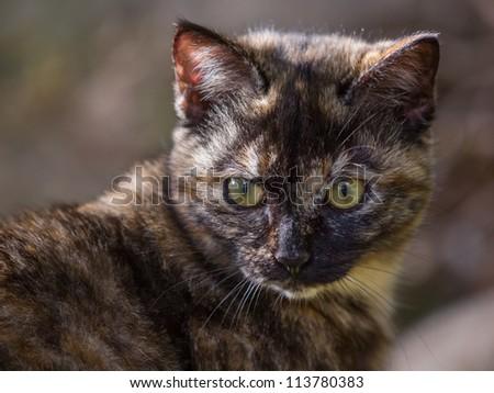 Cat turn around - stock photo