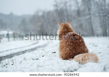 Cat waiting at driveway during snow. - stock photo