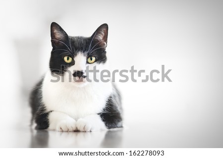 Cat waiting for food - stock photo