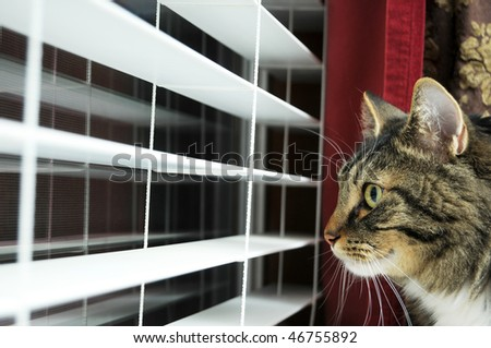 Cat waiting for his master to get home. He is still looking out the window, even at night. The poor thing is still hoping his master will get home soon. - stock photo