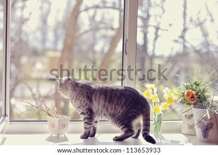 cat walk among the flowers on the windowsill looking out the window - stock photo