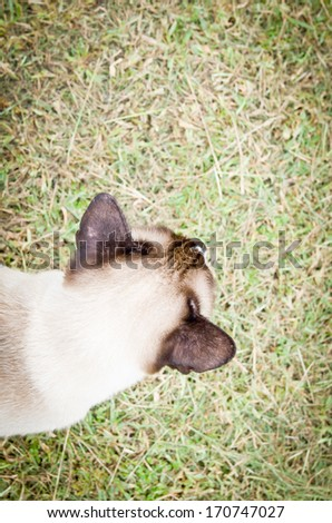 cat walking on grass in the park - stock photo