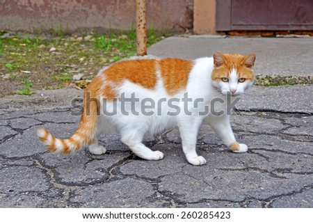 cat walking on the paved road - stock photo