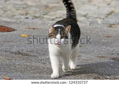 cat walking on the street - stock photo