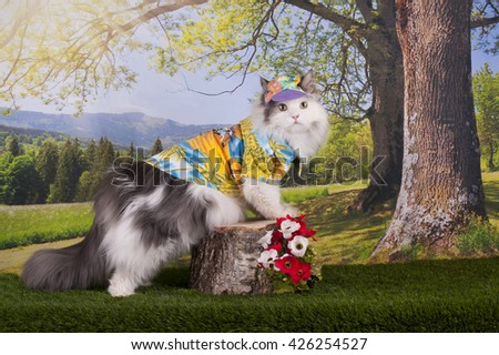 Cat walks in the forest on a warm summer day - stock photo