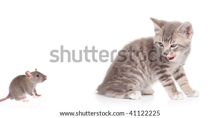 Cat watching a mouse isolated against white background - stock photo