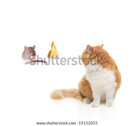 Cat watching a mouse nibbling some cheese isolated on white - stock photo