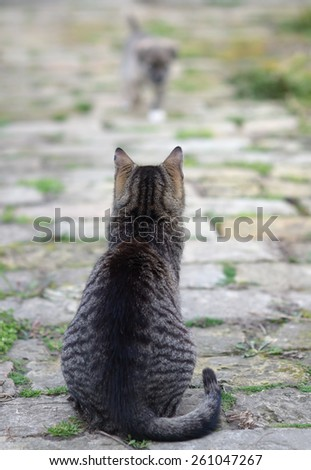 Cat watching the small puppy approaching her. - stock photo