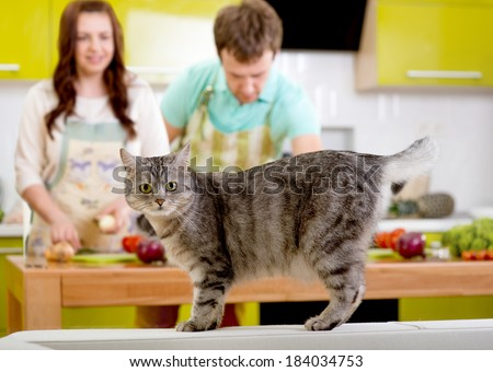 Cat watching to the camera with married couple on the background at the kitchen - stock photo