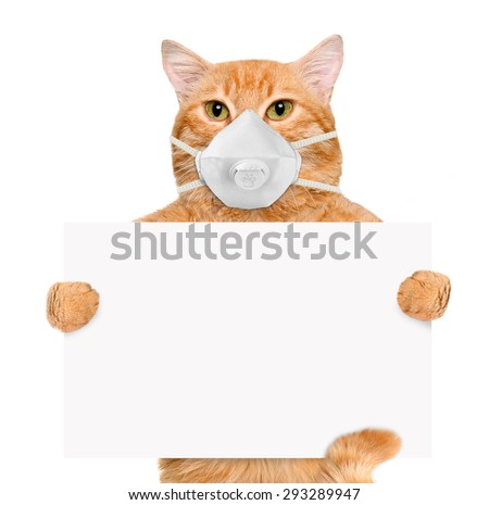 Cat wearing a face protective mask. - stock photo