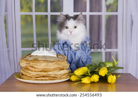 cat wearing a shirt with pancakes and tulips - stock photo