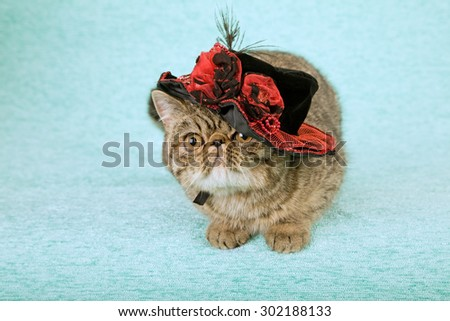 Cat wearing fancy red and black hat with feathers - stock photo