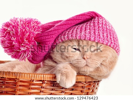 Cat wearing knit hat sleeping in a basket on white background - stock photo