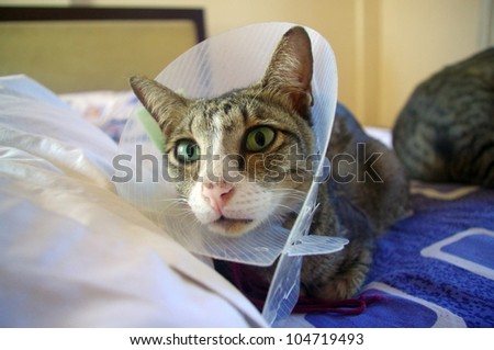 Cat wearing protective buster collar, sitting on bed. - stock photo