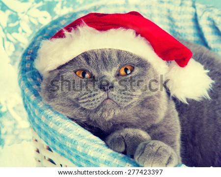 Cat wearing Santa hat dreaming in a basket - stock photo