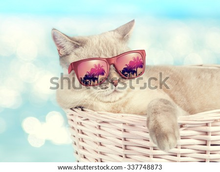 Cat wearing sunglasses relaxing in the basket against sea background - stock photo