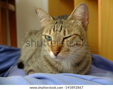 Cat winking sitting at home. - stock photo