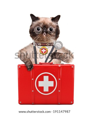 Cat with a first aid kit - stock photo