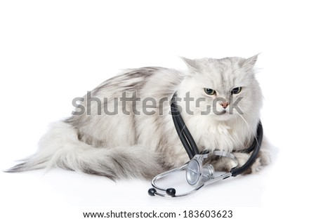 cat with a stethoscope on his neck. isolated on white background - stock photo