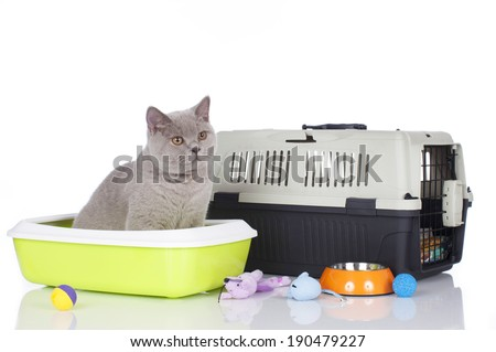 Cat with basic equipment - stock photo