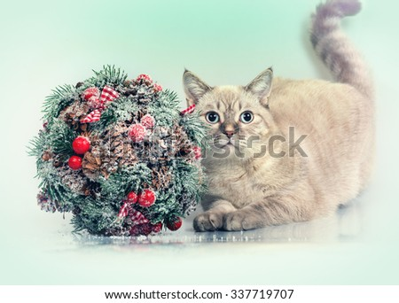 Cat with Christmas decoration kissing bough - stock photo